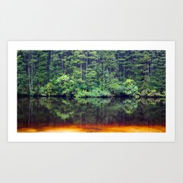 Cedar Trees and Cedar Water Art Print