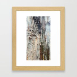 Colors of a Eucalyptus Framed Art Print