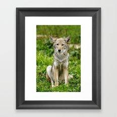 Coyote Framed Art Print