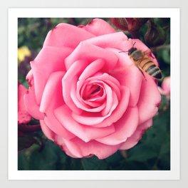 Pink Rose & Bee Art Print