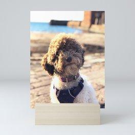 Curly Curious Dog in North Berwick Mini Art Print