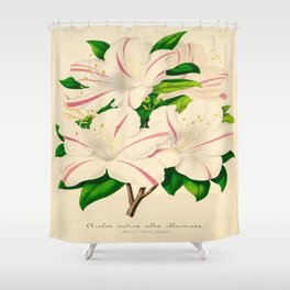 Azalea Alba Magnifica (Rhododendron indica) Vintage Botanical Floral Scientific Illustration Shower Curtain