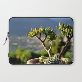suculent at sunset Laptop Sleeve