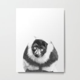 Black and white lemur animal portrait Metal Print