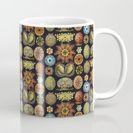 Ernst Haeckel Sea Squirts Ascidiae Black Background Coffee Mug