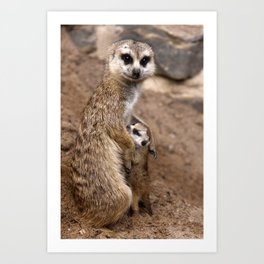 Meerkats | Erdmännchen Art Print