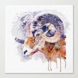Bighorn Sheep watercolor portrait Canvas Print