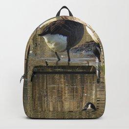 Ducks at John Heinz Wildlife Reguce Backpack