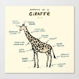 Anatomy of a Giraffe Canvas Print