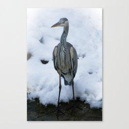 Grey Heron Canvas Print