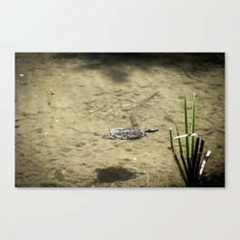 Going for a Swim Canvas Print