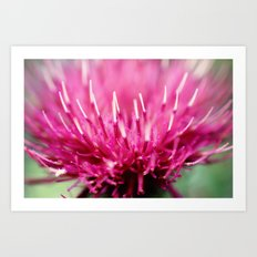Frosted Tips Art Print