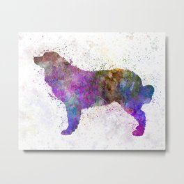 Bernese mountain dog in watercolor Metal Print