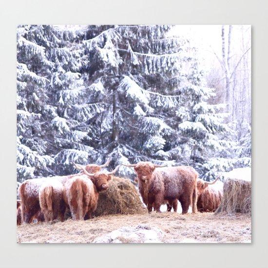 West Highland Cattle Canvas Print