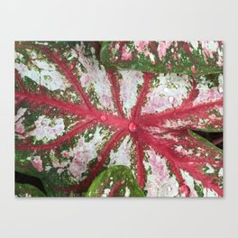 Heart of the Leaf Canvas Print