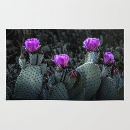 Cactus Blooming in the Anza-Borrego Desert State Park, Southern California Rug