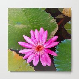 Pink Waterlily Flower Photo 6 Metal Print