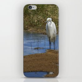 Snowy Egret of Chincoteague No. 3 iPhone Skin