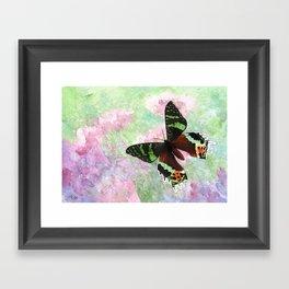 Urania Ripheus Butterfly Framed Art Print