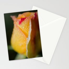 Dew on Yellow Rose Nature / Floral / Botanical Photograph Stationery Cards