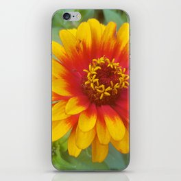 Zinnia on fire iPhone Skin