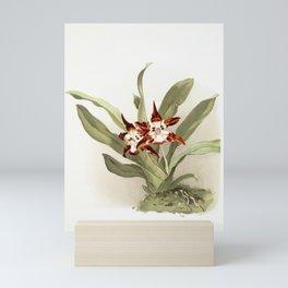 Zygopetalum burtii from Reichenbachia Orchids (1888-1894) illustrated by Frederick Sander (1847-1920 Mini Art Print