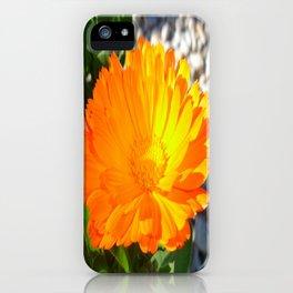 Bright Orange Marigold In Bright Sunlight iPhone Case
