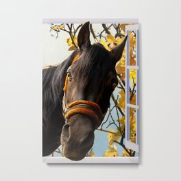 Curious Horse Looking Through The Kitchen Window Metal Print