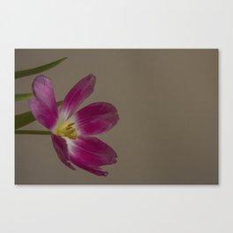 tulip_22 Canvas Print