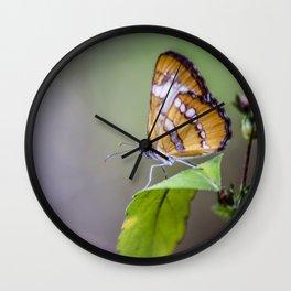 Walnut Creek Butterfly Wall Clock