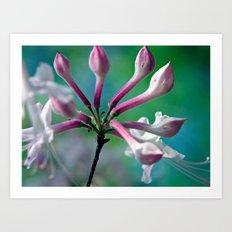 Budding/Blooming Honeysuckle Art Print