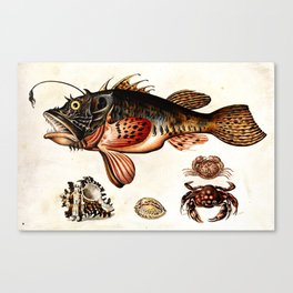 Deep sea fish, crabs and sea snails Canvas Print
