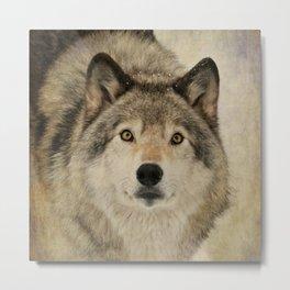 Timber Wolf Portrait Metal Print