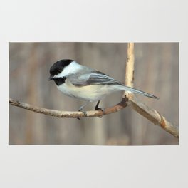 Hi, little Chickadee Rug