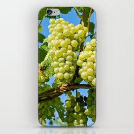 Delicious growing green grapes bunch farming on a beautiful blue summer sky background iPhone Skin