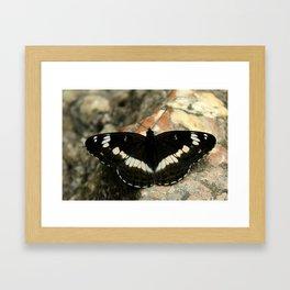 Butterfly on a Rock Framed Art Print