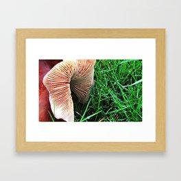 Mushroom and Dewdrops Framed Art Print
