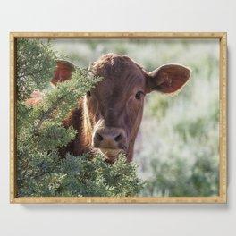 Shy Calf Serving Tray
