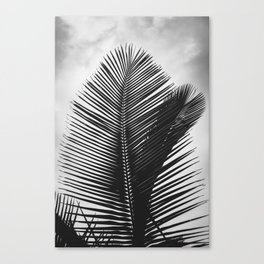 Tropical Palm Leaf Black and White Canvas Print