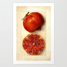 Vintage Botanical Pomegranate Art Print