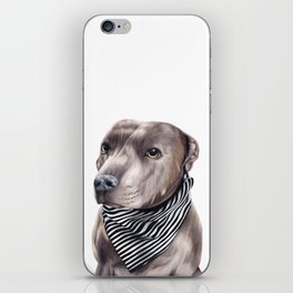 Blue Staffordshire Bull Terrier iPhone Skin