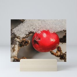 Rockspray Red Berry in The Snow.  Mini Art Print