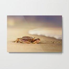 Crab Cribrarius Metal Print