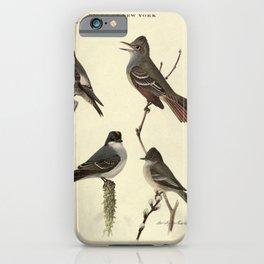 Olive-sided Flycatcher, Crested Flycatcher, Kingbird, Phoebe15 iPhone Case