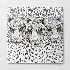 THREE SNOW LEOPARDS Metal Print