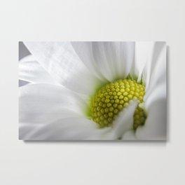 Makro_weiße_Blüten_1 Metal Print