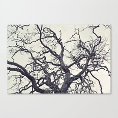 cold fall Canvas Print