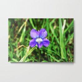 Violet 04 Metal Print