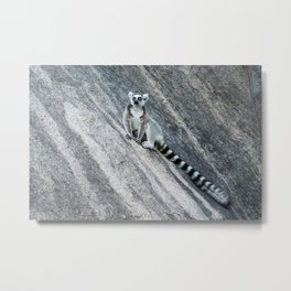 Bright eyes in a black and white world Metal Print
