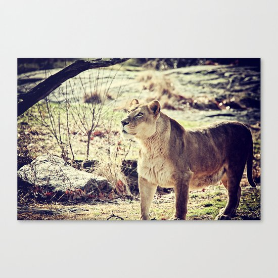 Something Caught His Eye Canvas Print
